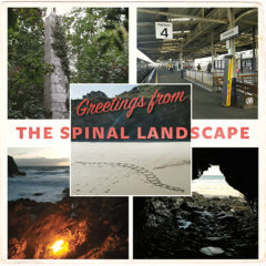 Cover art for The Spinal Landscape